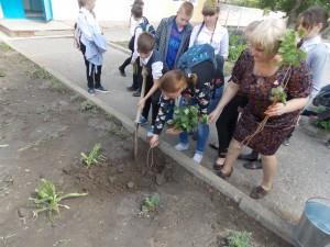 """Школьная акция """"Сирень Победы"""""""